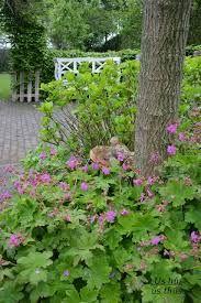 Afbeeldingsresultaat voor doorkijkjes in kleine tuin