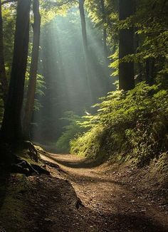 Magic forest by Tomasz Boinski. Sunlight shining into dark forest. Dirt foot path