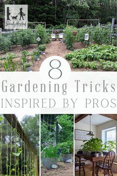 900 Gardening Tips Ideas In 2021 Gardening Tips Garden
