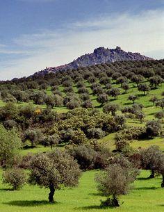 Olive groves, Monsanto, Portugal.