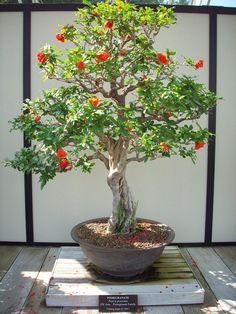 Pomegranate Bonsai by ~omega856 on deviantART
