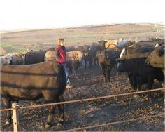 Speak Up: Antibiotics in Food Animals All About Animals, Animal Welfare, Nebraska, Cattle, Farming, Dodge, Sick, Cow, Medicine