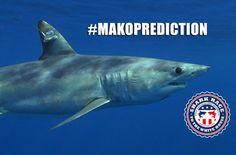 Peculiar carrera de tiburones declara a @realDonaldTrump ganador...