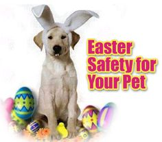 Easter Safety for Your Pet - Doggie Vogue Blog