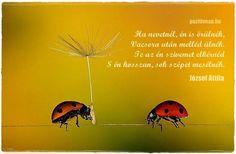 József Attila versrészlete. A kép forrása: Pozitív Nap # Facebook Nap, Poems, Messages, Thoughts, Facebook, Funny, Quotes, Quote, Quotations