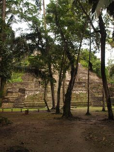 """The Mayan ruins of Lamanai Belize once belonged to a sizable Mayan city in the Orange Walk District. """"Lamanai"""" comes from the Maya term for """"submerged crocodile"""", a nod to the toothy reptiles who live along the banks of the New River."""
