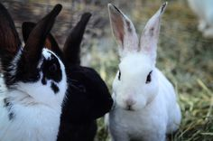 Our Rabbitry: Why I Love Raising Rabbits For Meat