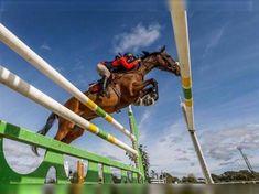 Yegua de salto en venta Outdoor Decor, Show Jumping, French Chairs, Horses For Sale, Equestrian