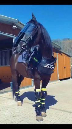 Most Beautiful Horses, Pretty Horses, Animals Beautiful, Horse Riding Quotes, Horse Quotes, Horse Girl, Horse Love, Horse Videos, Cute Ponies