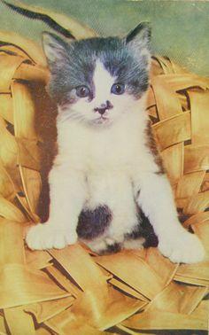 Joli chaton. Animals, Vintage, Grey, Wild Animals, Pretty, Dog, Cards, Animaux, Animal