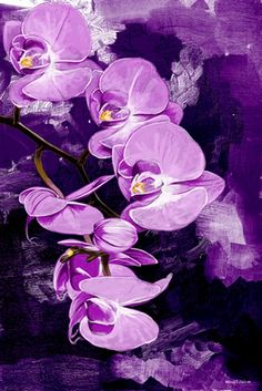 Maxwell Dickson 'Purple Orchid' Floral Flower Graphic Art on Wrapped Canvas Size: Large Canvas Wall Art, Canvas Art Prints, Painting Prints, Canvas Size, Painting Art, Paintings, Purple Art, Purple Orchids, Purple Stuff