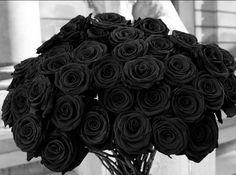 Rare Flowers, Black Flowers, Purple Roses, Black Tulips, Diy Flowers, Black And Gold Aesthetic, Rose Flower Photos, Yennefer Of Vengerberg, Colette