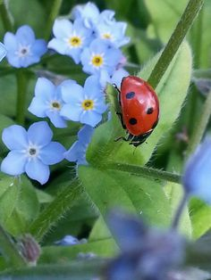 a little ladybug with pretty blue flowers