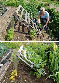 DIY Pallet Cucumber Trellis -- Re-purpose a wood pallet into a quick and sturdy DIY cucumber trellis -- no tools required. It gives space for the plants to grow and makes harvesting an easy task gardening No tools required DIY Pallet Cucumber Trellis Vegetable Garden Design, Veg Garden, Garden Beds, Vegetables Garden, Veggie Gardens, Vegetable Gardening, Easy Garden, Garden Tools, Garden Plants
