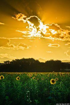 Under Skies Of Gold ~ Longmont, Colorado