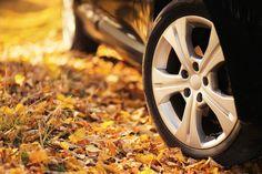 Auto Cicognara: Auto Usate e Service a Milano - 3939578915 (anche WhatsApp) STAGIONE AUTUNNALE: la tua auto è pronta? Cadono le foglie, si abbassano le temperature, le piogge cominciano a cadere ... e la tua auto è pronta? Ti aspettiamo per un controllo gratuito su prenotazione. http://www.autocicognara.it/AC15/servizi.php  #AutoCicognara #AutoUsate #Officina #Carrozzeria #CambioOlio #TagliandoAuto #PastiglieFreni #RevisioneAuto #Milano #AC63MI #WhatsApp #Autunno #Autumn