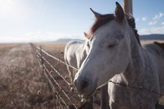 Closeup shot of a cute white horse with closed eyes on the countryside - Buy this stock photo and explore similar images at Adobe Stock Valentines Day Cards Diy, Closed Eyes, Countryside, Close Up, Adobe, Shots, Horses, Stock Photos, Explore