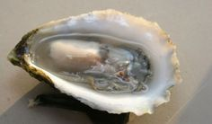 Jim Markow and Karen Rivara have been raising New England oysters for more than 30 years. Get 100 for $115