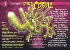 Shoot Off, Wild Creatures, Strange Creatures, Monster Book Of Monsters, Underwater Creatures, Marine Biology, Animal Species, Creature Feature, Ocean Life