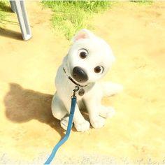 Isn't he cute?  #Bolt