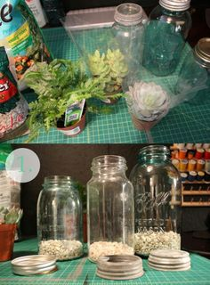 Plants in jar
