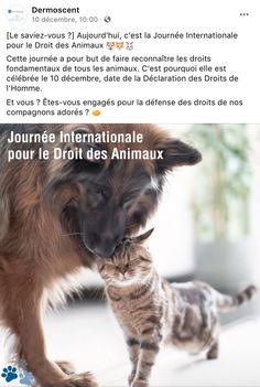 Journée internationale pour le droit des animaux Dermoscent Cats, Animals, Animal Rights, Gatos, Animales, Animaux, Animal, Cat, Animais