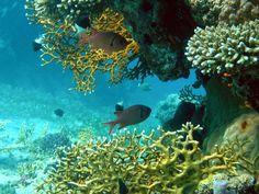 Faune et flore marine - Poissons tropicaux - Abysses les coraux