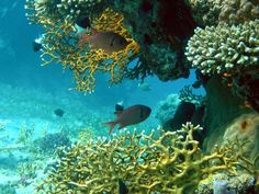Faune et flore marine - Poissons tropicaux - Abysses les coraux Under The Ocean, Planet Ocean, Sea World, Motion Design, Storyboard, Fresh Water, Underwater, Fish, Palmiers