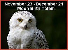 Animal Birth Totems | Balanced Women's Blog Animal Spirit Guides, Spirit Animal, Power Animal, Totems, Birth, Blog, Animals, Totem Poles, Animales