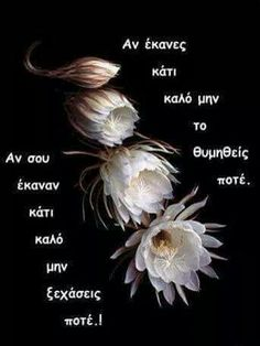 Greek Quotes, Wise Words, Jokes, Letters, Humor, Sayings, Life, Inspiration, Greek