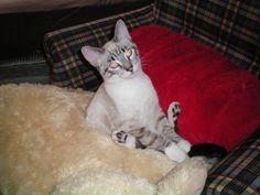 uh huh...??...my cat Comet xo rip xo