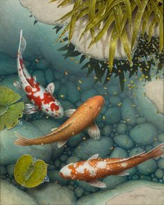 Terry Gilecki is a highly aclaimed painter of the beautiful Koi fish and the surreal world they live in. Art Koi, Fish Art, Koi Fish Drawing, Fish Drawings, Koi Painting, Stone Painting, Koi Fish Pond, Beautiful Fish, Water Lilies