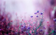 Meadow Flowers Wallpaper Free Download For Desktop & Mobile