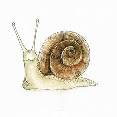 Illustration Pen And Ink, Woodland Illustration, Doodle Drawings, Cute Drawings, Animal Drawings, Snail Cartoon, Giant African Land Snails, Snail Art, Dark Art Photography