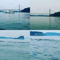 【saranheyo1961】さんのInstagramをピンしています。 《呼子にて。イルカの群れを見ることが出来ました❗船長さんにラッキーですね✨と言われました。#風景#景色#呼子#イルカ#海#お気に入り#好き#写真好きな人と繋がりたい #like#likes#likefollowback #like4like#love#loves #lovenature #ig#ig-japan》