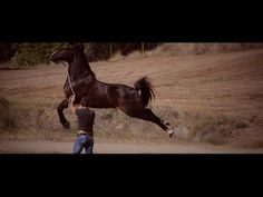 Amazing Freestyle Will Leave Your Jaw Dropped And Your Heart Inspired – The Horseaholic