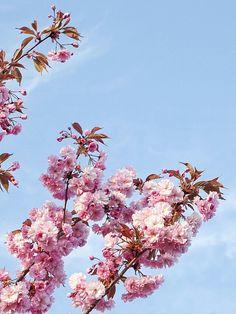 Auf der Mammilade n-Seite des Lebens: Im Blütenrausch   Ganz viel Frühling für alle, aber auch ganz viel Mehrwert für den Blog?