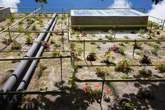 สถาปัตยกรรมมีชีวิต เพิ่มความเขียวให้บ้านด้วยผนังคอนกรีตสุดกรีน