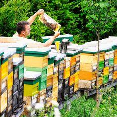 Dürfen wir vorstellen 🥁: Michael von der Bio-#Imkerei #Allesch in St. Anna ob #Reifnitz und seine fleißigen Bienen. 🐝 Sie liefern uns den herrlichen #Bio-#Cremehonig für Deine BROT.ZEIT 🕰. Sobald wir wieder für Euch öffnen dürfen, in all unseren Cafés - mit einer Auswahl an #Brotspezialitäten, geschäumter #Butter von der #Kärntnermilch, hausgemachtem Kräuter-#Topfen-Aufstrich und feinster #Kalbsleberstreichwurst vom Feinen Haus #Frierss. Ma guat! Partner, Anna, Butter, Pranks, Spreads, Bees, Home Made, Things To Do, Simple