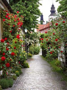 Alley of Roses in Visby, Sweden