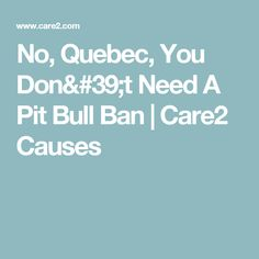 No, Quebec, You Don't Need A Pit Bull Ban   Care2 Causes