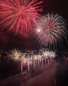 Saules mūžu Latvijai  Latvias 101th birthday Independence Day Images, Dandelion, Birthday, Flowers, Plants, Images On Independence Day, Birthdays, Dandelions, Plant
