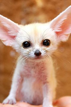 50 Cute Baby Animals that Make You Smile | The Design Inspiration