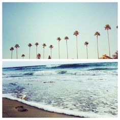 Palm trees and ocean waves.  #california #ocean