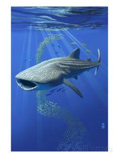 Whale Shark Prints $30 Shark Art, Shark Diving, Scuba Diving, Delphine, Ocean Creatures, Underwater Creatures, Tropical Fish, Colorful Fish, Underwater World