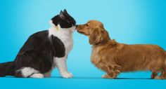 Watch Out For Heatstroke - It Can Kill Your Dog or Cat - Banfield Pet Hospital®