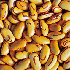 Tiger's Eye Beans  One of the most beautiful of all the dry beans. Wonderful rich flavor and smooth texture. Very tender skins almost disappear when cooked. Great for chili or refried beans.