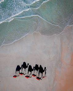 Early morning camel walk  #camel #shadow #seeaustralia #westernaustralia #hellobluey #kimberleybucketlist #thekimberleyaustralia #amazing_wa  #thisiswa #westisbest #summer #australiasnorthwest #earthpix #focusaustralia  #exploreaustralia #travel  #kimberley #coast #australia #goexplore #visitbroome #aerialphotography #ellenshow #lonelyplanet #notphotoshopped #thebroomebible #lovebroome #uniquekimberley #awesomeglobe by yane.photography