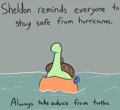 Sheldon reminds everyone to stay safe form hurricanes, always take advice from turtles, text; Sheldon the Tiny Dinosaur Sheldon The Tiny Dinosaur, Cute Comics, Funny Comics, Happy Comics, Turtle Dinosaur, Funny Cute, Hilarious, Book Art, Tiny Turtle