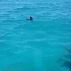 Dog Plays with a Dolphin
